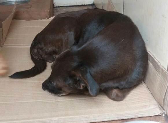 Delegada busca pessoas dispostas a adotarem os animais   Foto: Divulgação / Polícia Civil