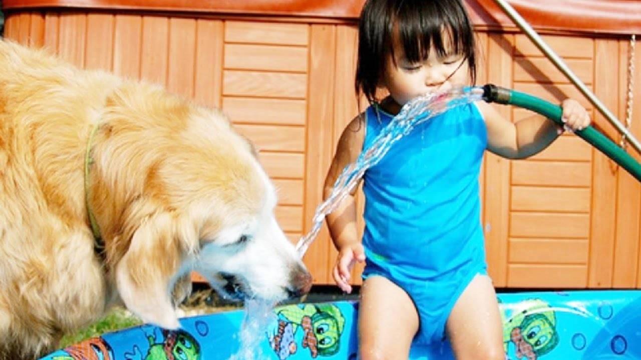 Especialista explica como melhorar o convívio entre pets e crianças   Foto: Reprodução