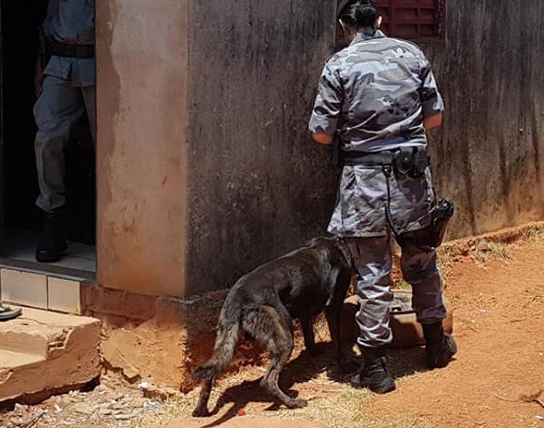 Cão de faro Iron localizou drogas em um cano no quintal dos fundos do domicílio   Foto: Divulgação / PM