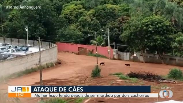 o dono dos cães relatou que houve uma queda de energia e isto pode ter feito com que o portão se abrisse sozinho | Foto: TV Anhanguera